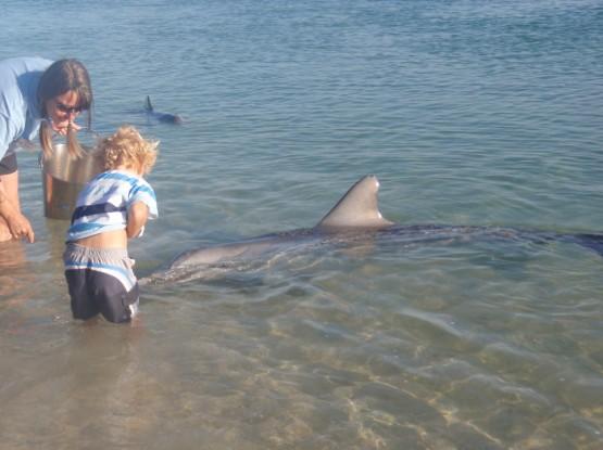 Robinson feeding a dolphin