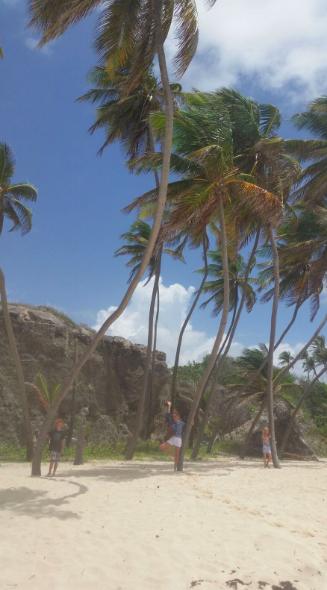 private palm garden